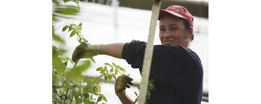 España prepara una ley pionera para la producción agrícola ecológica